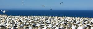 Banner Aves Marinas
