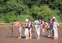 Observación de aves (birdwatching)
